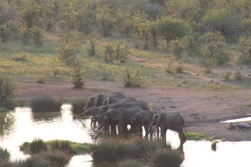 Elephants at the lodge